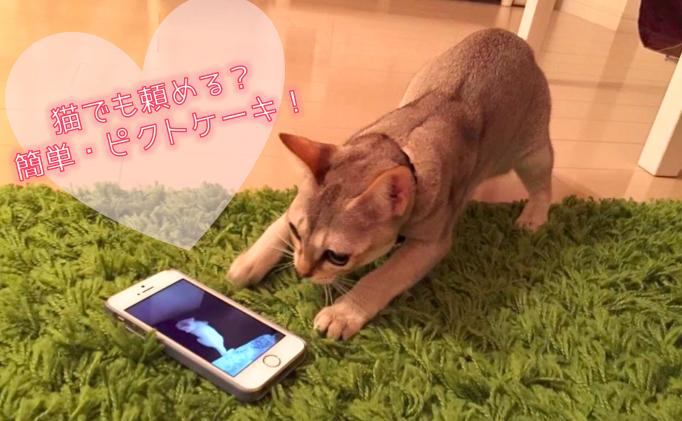猫:https://instagram.com/krnchrisより